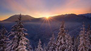Превью обои снег, природа, мороз, елки, закат, лесогорье, красивый, зима