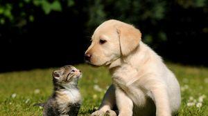 Превью обои собака, кот, котенок, щенок, трава