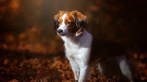 Превью обои собака, листва, осень, щенок