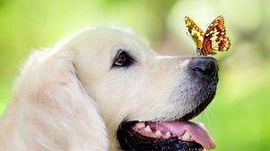 Превью обои собака, морда, бабочка, высунутый язык, весна, лето