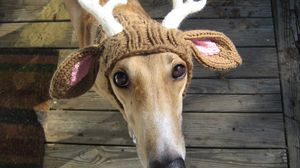 Превью обои собака, шапка, олень