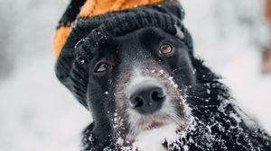 Превью обои собака, шапка, снег, зима, морда, размытость