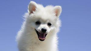 Превью обои собака, язык, щенок, пёс