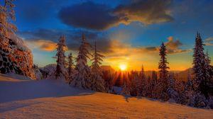 Превью обои солнце, закат, вечер, снег, деревья, ели, тень