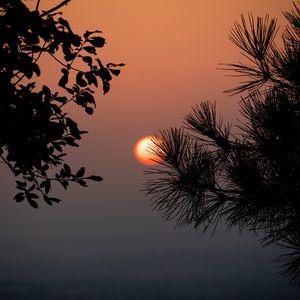 Превью обои солнце, закат, ветки, силуэты, пейзаж, темный