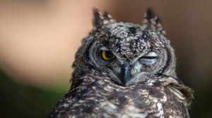 Превью обои сова, глаза, птица, хищник