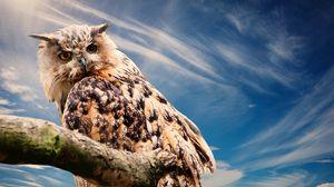 Превью обои сова, хищник, птица, небо