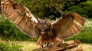 Превью обои сова, крылья, взмах, хищник