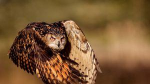 Превью обои сова, птица, полет, крылья