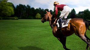 Превью обои спорт, конный, лошадь, конь, наездник