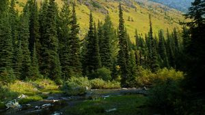 Превью обои сша, вашингтон, mt baker-snoqualmie national, лес, река