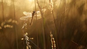 Превью обои стрекоза, крылья, насекомое, трава, лучи