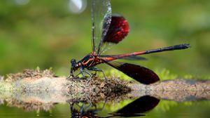 Превью обои стрекоза, насекомое, крупным планом