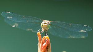 Превью обои стрекоза, насекомое, крылья