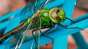 Превью обои стрекоза, насекомое, крылья, крупным планом