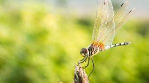 Превью обои стрекоза, насекомое, макро, крупный план