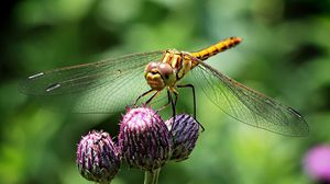 Превью обои стрекоза, насекомое, цветок, растение, макро
