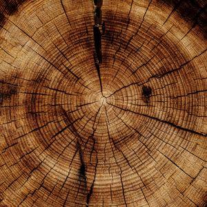 Превью обои ствол, дерево, текстура