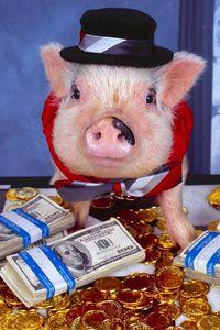 Превью обои свинья, наряд, деньги, шляпа, золото, монеты, комната, костюм