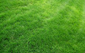 Превью обои текстура, трава, поле, газон, зеленый