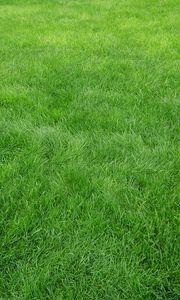 Превью обои текстура, трава, поле, зеленый