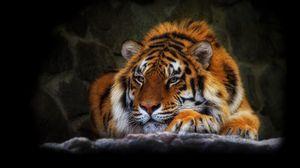 Превью обои тигр, дикая кошка, темный фон