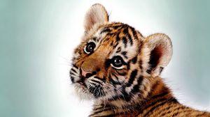 Превью обои тигр, котенок, большая кошка, детеныш, хищник