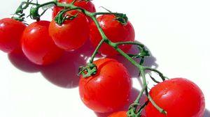 Превью обои томат, помидор, ветка, овощ