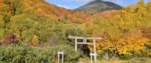 Превью обои тории, лес, горы, пейзаж, япония