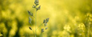 Превью обои трава, растение, макро, соцветие, крупный план