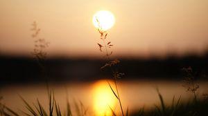 Превью обои трава, солнечный свет, закат