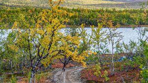 Превью обои тропинка, деревья, озеро, гора, пейзаж