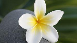Превью обои цветок, камень, медитация, баланс