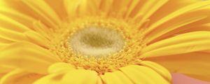 Превью обои цветок, лепестки, яркий, желтый, макро