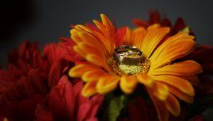 Превью обои цветок, лепестки, обручальные кольца, свадьба