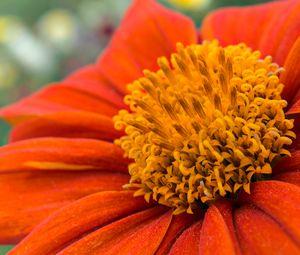 Превью обои цветок, лепестки, пыльца, красный, макро