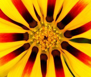 Превью обои цветок, лепестки, пыльца, желтый, макро