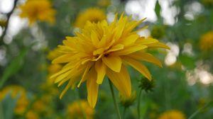 Превью обои цветок, лепестки, растение, макро, желтый