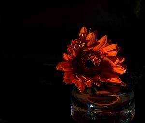 Превью обои цветок, лепестки, темный, красный
