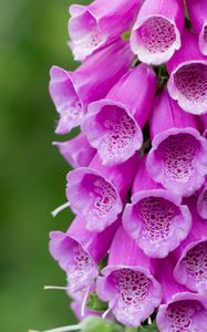 Превью обои цветок, растение, макро, фиолетовый