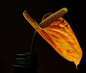 Превью обои цветок, растение, макро, темный