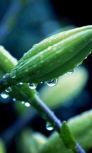 Превью обои цветок, растение, макро, капли
