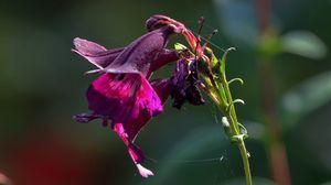 Превью обои цветок, растение, паутина, макро