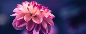 Превью обои цветок, розовый, лепестки, бутон, крупным планом
