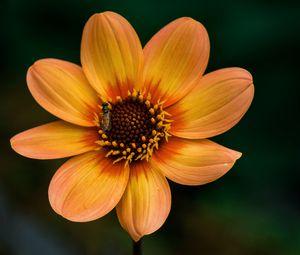 Превью обои цветок, цветение, растение, насекомое