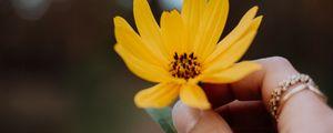 Превью обои цветок, желтый, рука, пальцы, крупный план