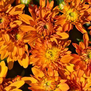 Превью обои цветы, лепестки, оранжевый, макро