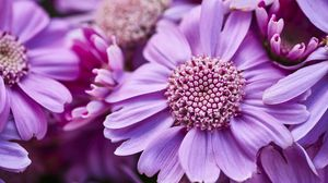 Превью обои цветы, лепестки, растения, фиолетовый, макро