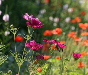 Превью обои цветы, лепестки, растения, макро, размытие