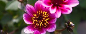 Превью обои цветы, листья, розовый, макро